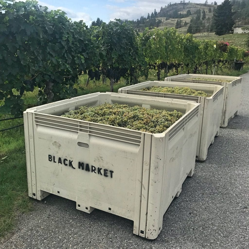 Black Market Wine Co. #BCHarvest19